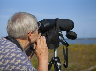 Birding in Port Elgin