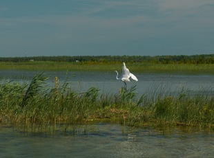 Birding Tours with Bruce Peninsula Boat Tours