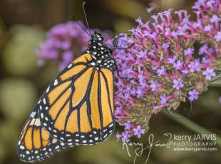 Butterfly Gardens of Saugeen Shores